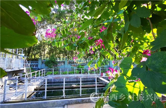"""巴马县:盘阳河畔""""花园""""污水处理厂"""