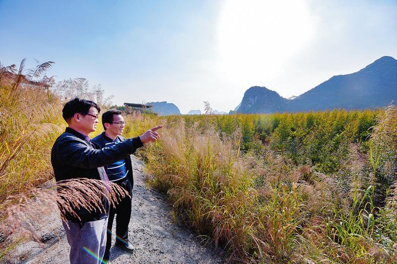 南宁市探索建立林长制守护绿水青山