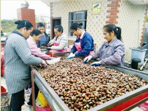 天峨县:冷链物流助推农业提质