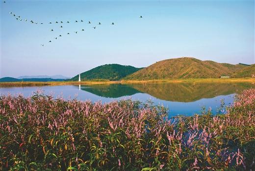 横县:乡村风景线留住乡愁印记
