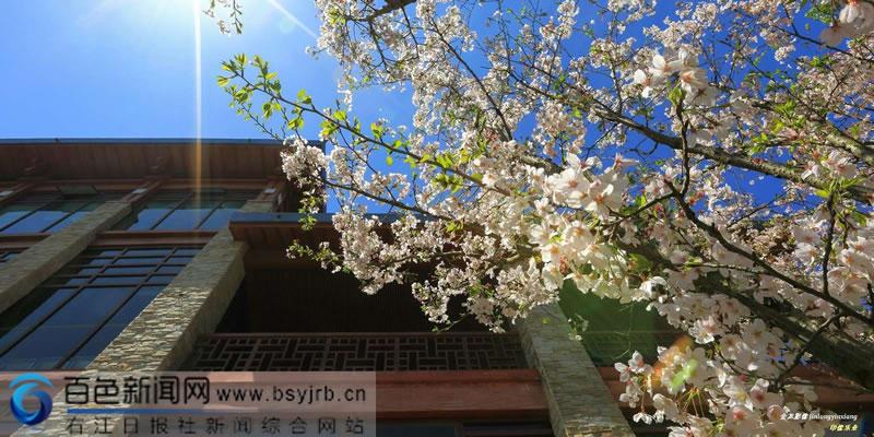 乐业县:满城春色半城花